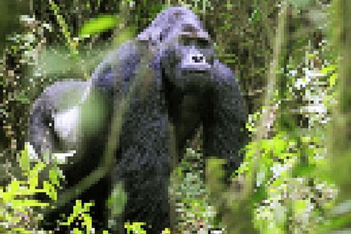 Giornata mondiale dell'ambiente 2020 – La perdita di biodiversità
